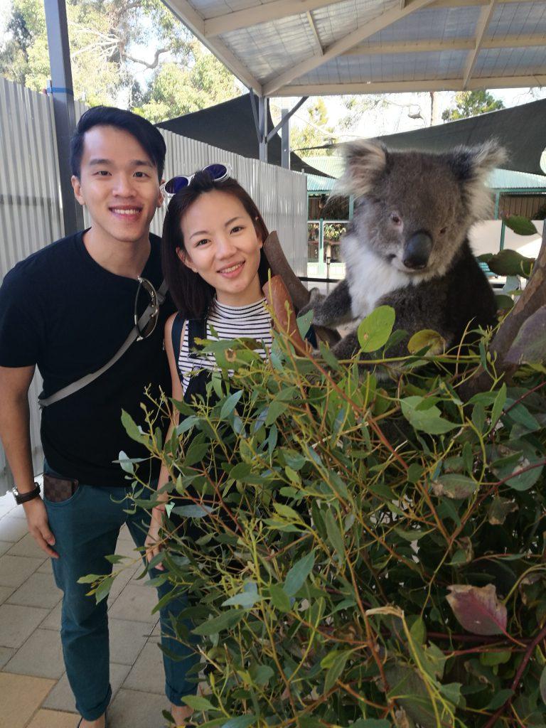 Caversham With Koala